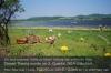 s05-06-theresienhof-kuehe-bahndamm-blumen-weide-gut