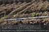 s09-02-mais-abstand-pflanzen-15-cm-gut