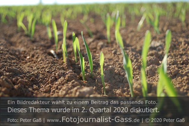 Das Frühjahr 2020 war warm. Foto: Peter Gaß