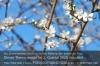 Frühjahr. Foto: Peter Gaß