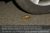 Krötenwanderung. Foto: Peter Gaß