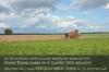 Nordzucker erwartet durchschnittliche Erträge bei Zuckerrüben. Foto: Peter Gaß
