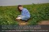 Kartoffelernte 2020: 420 dt/ha. Foto: Peter Gaß