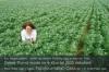 Die weiße Lupine kann auch auf schlechteren Standorten angebaut werden. Foto: Peter Gaß