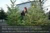 Den Weihnachtsbaum direkt nach dem Kauf am Stamm anschneiden und ins Wasser stellen. Foto: Peter Gaß