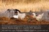 Die Vogelgrippe nimmt in Deutschland dramatische Ausmaße an. Foto: Peter Gaß