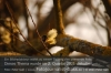Der Bundestag hat ein Insektenschutzpaket beschlossen Foto: Peter Gaß