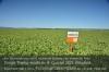 Biologische Saatgutbeizen: KWS bringt Produkt zur Marktreife Foto: Peter Gaß