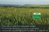 s01-02-dinkel-schild-bioland-rechts-gut