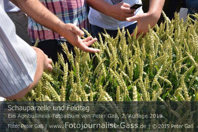 """Titelbild Agribusiness Fotoalbum """"Schauparzellen und Feldtage"""". Foto: Peter Gaß"""