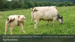 """Agribusiness: Tierarzt Dr. Bernhard Lingemann erklärt Klauenerkrankungen in der Rinderhaltnung. Foto: Peter Gaß. Ein Motiv aus dem Fotoalbum """"Agrarwende"""", 1. Auflage 2021"""